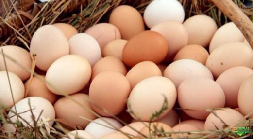 Ovos Caipira Orgânicos
