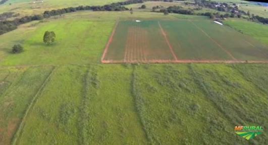 Fazenda 176 hectares próxima de Nova América/Rubiataba/Itapaci