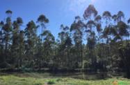 Vendo Eucalipto Madeira
