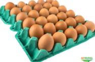 Compro Ovos Caipira
