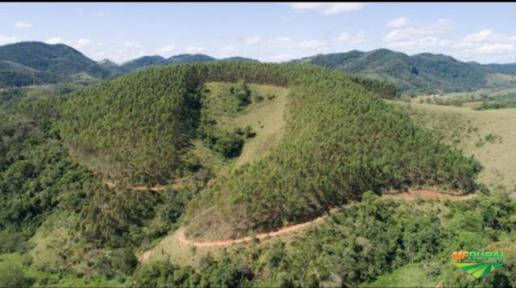Plantação de Eucalipto Região Serrana do Rio de Janeiro-RJ