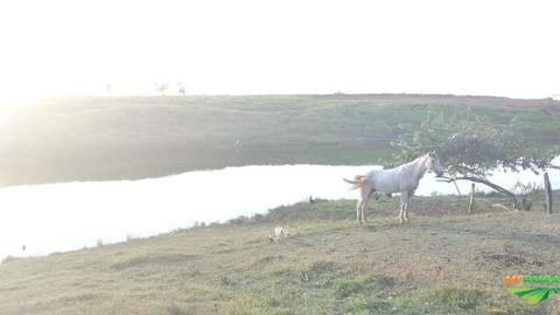 Fazenda 250 hectares em roraima