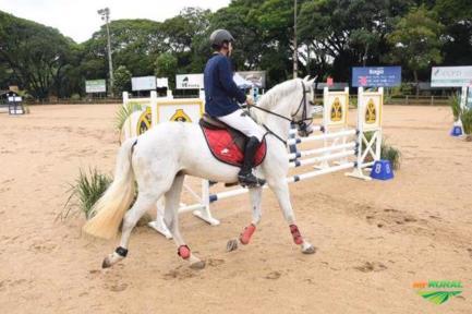 Cavalo de Salto Lusitano