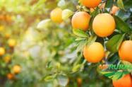 Procuro Adminstrador de fazenda com experiencia em citrus