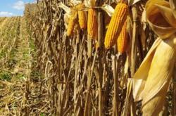 Procura-se terras para Plantio de Cereais