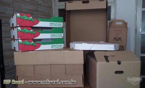 Caixas Para Frutas