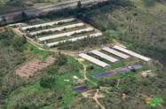 Fazenda Granja de Aves & Suínos | BR 060 DF/GO | 60 Hectares