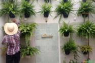 Locação de plantas em vasos em Brasilia DF