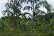 VIVEIRO  PLANTAS