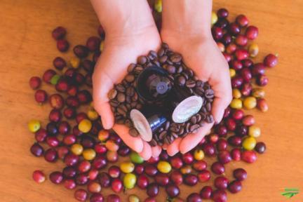 Café artesanal em cápsulas para Nespresso