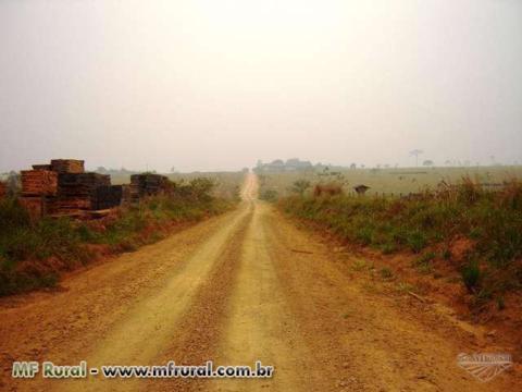 Grande Fazenda  região de Aripuana MT