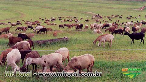 Curso Online Melhoramento Genético de Ovinos