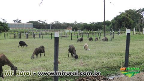 Curso Online Gerenciamento na Criação de Ovinos