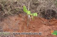 Curso Online Restauração Florestal em Áreas de Preservação Permanente e Reserva Legal