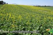 Curso Online Produção de Óleo Vegetal Comestível e Biocombustível