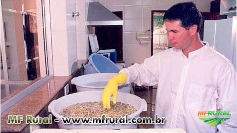 Curso Online Produção de Brotos Comestíveis