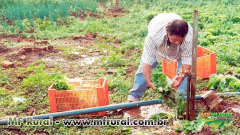 Curso Online Horta Caseira - Implantação e Cultivo