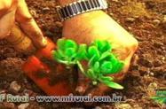 Curso Online Cultivo Orgânico de Plantas Medicinais