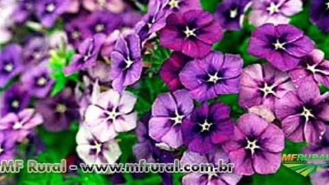 Curso Online Como Produzir Violetas