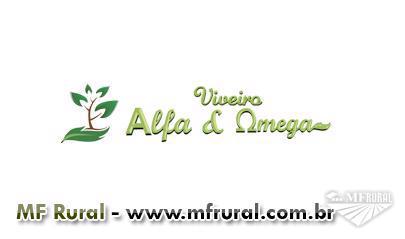 Viveiro Alfa e Ômega - Mudas Nativas (Nativas e Mogno Africano)