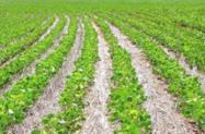 Procuro arrendamento de fazenda para plantio soja próximo do DF (em MG ou GO)
