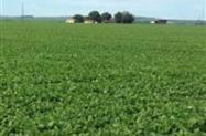 Fazenda próximo a Goiânia com capacidade para pivô